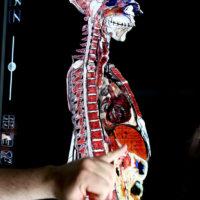Anatomage5
